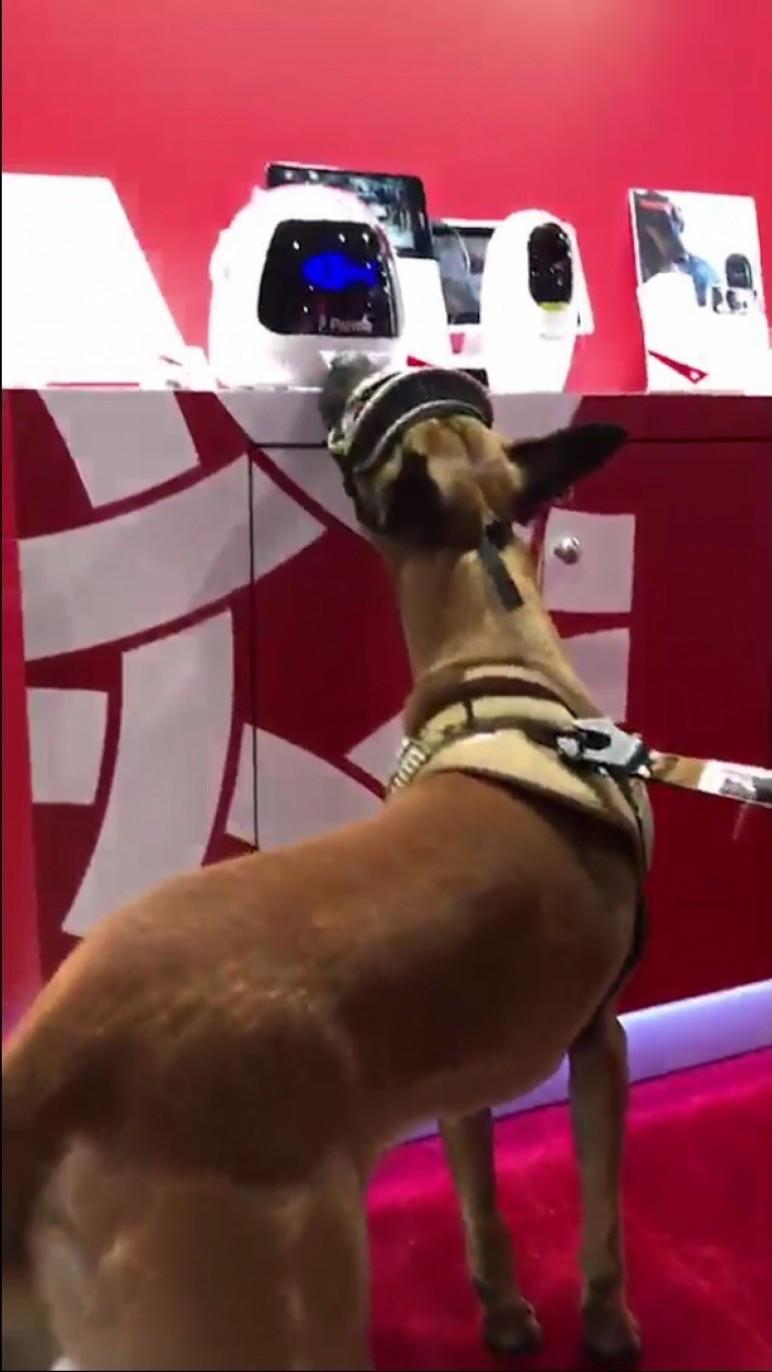 狗明星來台灣精品館試用波寶創新寵物餵食機